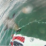 Killer Seal!! | Or Scared GoPro Surfer Fail