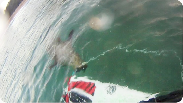 Killer Seal!!   Or Scared GoPro Surfer Fail