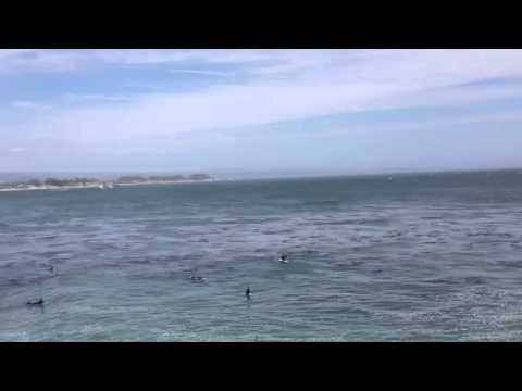 Surfing Competition – Men Warm Up