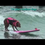 Surf Dog Ricochet wins 1st place at Unleashed by Petco Surf Dog Competition