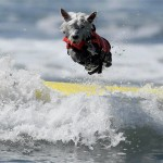surfing competition – surfing competitions in california 2014