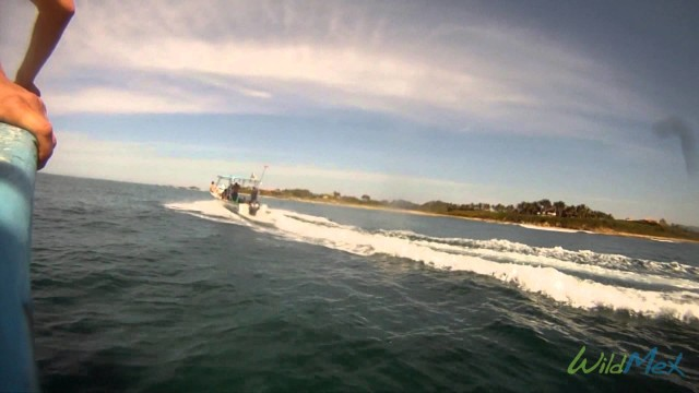 Punta Mita Intermediate Surf Trip and Lessons with WildMex Surf and Adventure