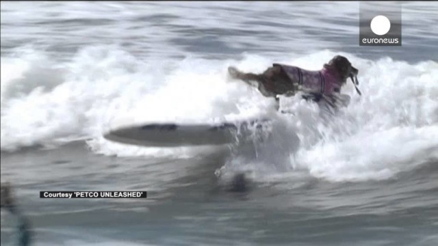 USA: Surf City Surf Dog Competition In Huntington Beach