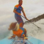 Surfing dogs: Pups hit the waves for surfing competition in Australia