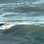Surfing Fail Northwall Coffs